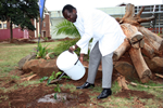 Vice Chancellor Engineer Quinton Kanhukamwe Planting a Red Mahogany Tree on Campus during the 2012 Tree Planting Week in December